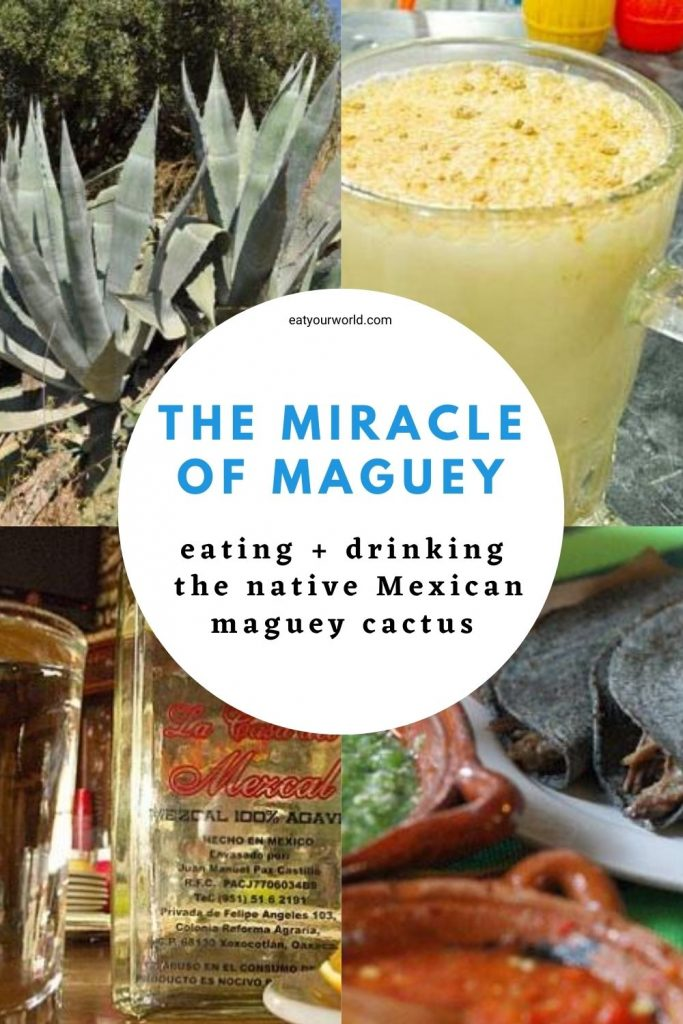 The maguey plant is important to ancient Aztec and modern Mexican life.