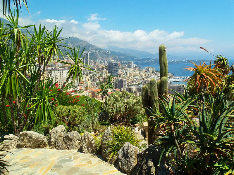 View of cacti against backdrop of Monaco skyline at the Jardin Exotique