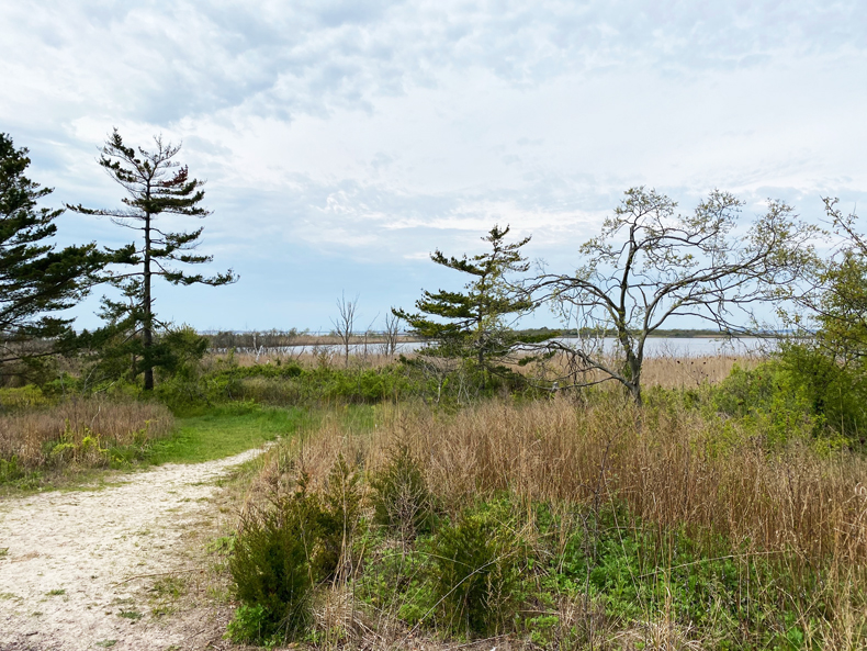 Beach view of Jamaica Bay Wildlife Refuge
