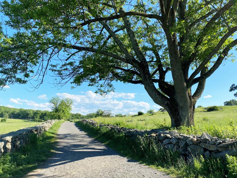 Trail at Rockefeller State Park Preserve