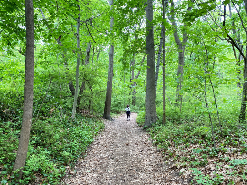 Boy hiking in forest at Sands Point Preserve in Long Island, NY