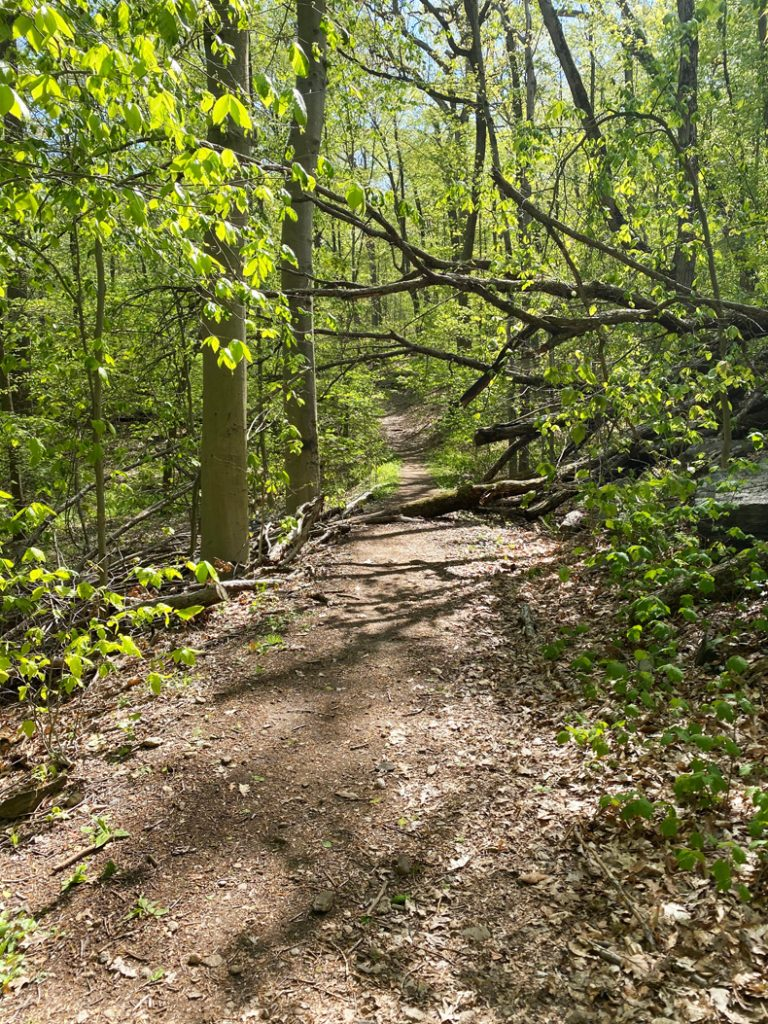 Forest trail in Saxon Woods Park in Westchester