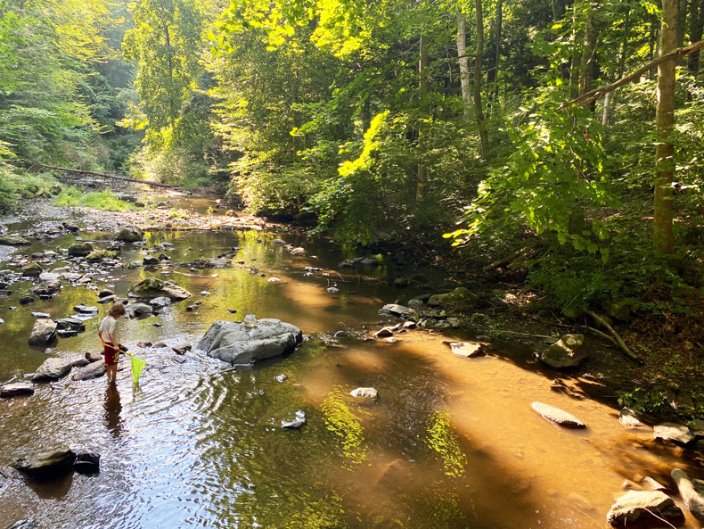 Boy searching for crayfish in Westchester, NY
