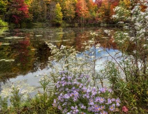 A beautiful early-fall shot of a lake in the Sullivan Catskills with end-of-summer wildflowers and colorful-leaved trees