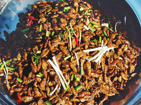 Edible bugs from a market in Cambodia