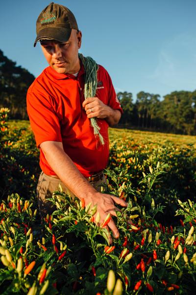 John Simmons in a tabasco pepper field