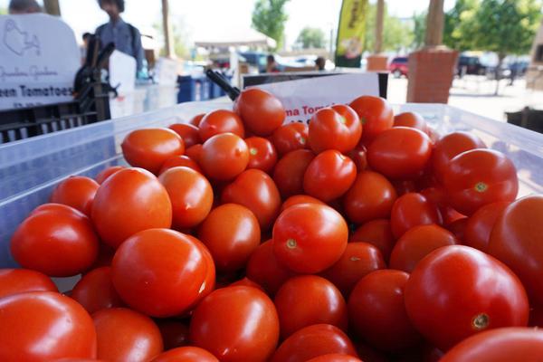 Tomatoes at the Saskatoon farmers market, in Canada