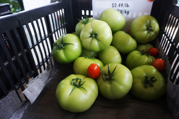 Green tomatoes from the Saskatoon farmers market