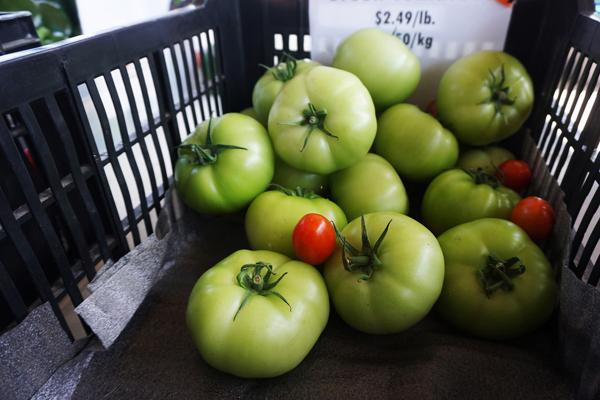 Green tomatoes from the Saskatoon farmers market
