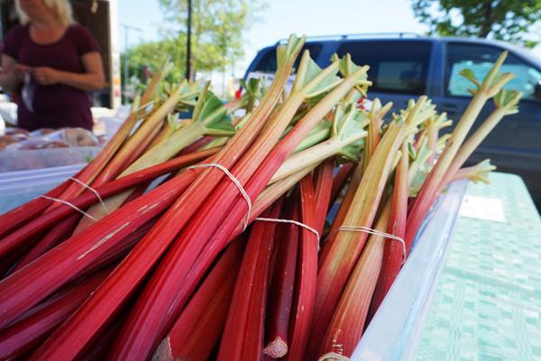 Rhubarb stalks at the Saskatoon farmers market