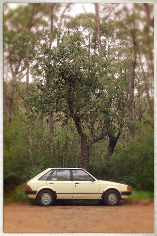 A 1984 Ford Focus, in Australia
