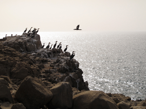 Sea birds take flight off a rocky outcrop on Iles de la Madeleine, rocky islands off Dakar, Senegal