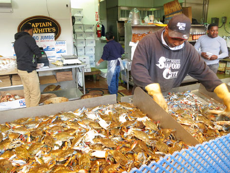 Crab counter at Maine Ave Fish Market, Washington DC