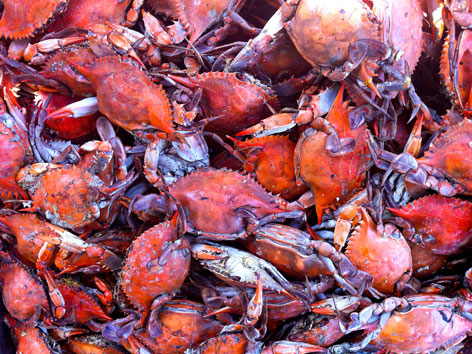 Chesapeake Bay blue crabs from Maine Ave Fish Market, Washington, DC