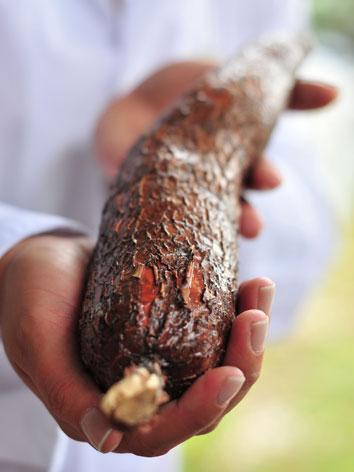 Cassava root in Madagascar
