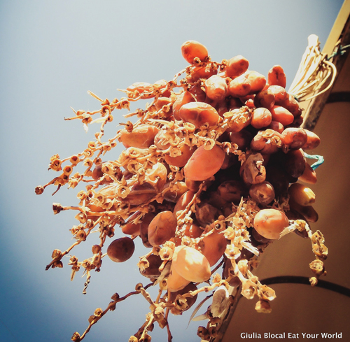 Dates on a date tree in Tunisia.