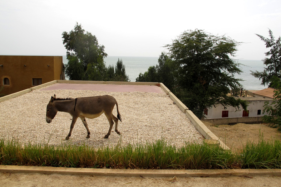 A donkey walks a roof in Popenguine, Senegal
