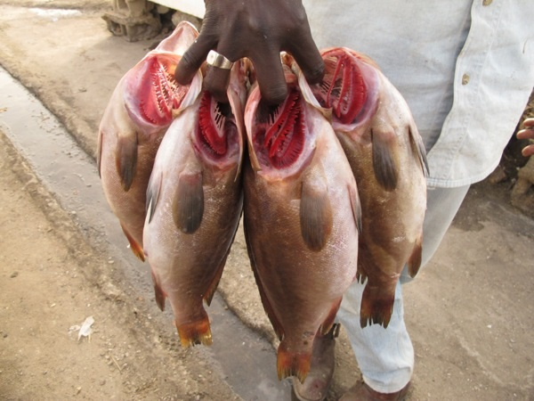 Fish vendor in Dakar with fish in his hand.