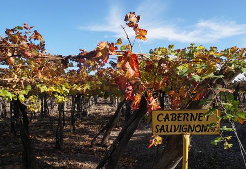 Cabernet and malbec vineyards in Mendoza, Argentina