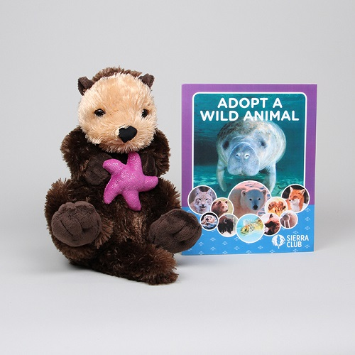 Stuffed plush sea otter by Sierra Club
