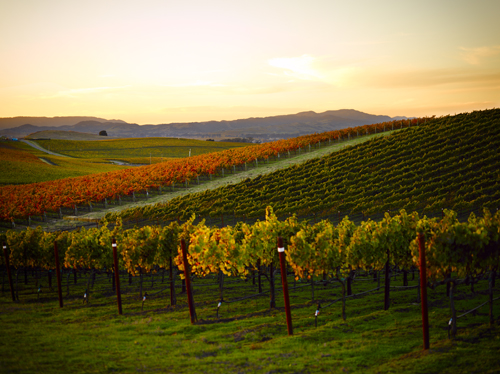 Trinchero Napa Valley Montone vineyard in California