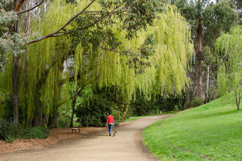 Walking through a green park in Hobart, Tasmania