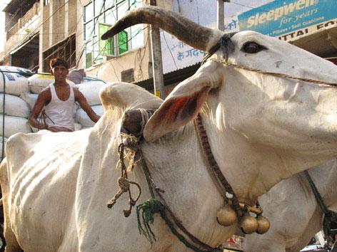 Street scene in Agra, India