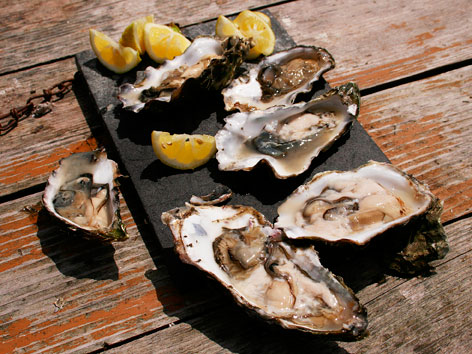 Northern California oysters from Tomales Bay