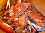 Blue Crabs from Maine Avenue Fish Market in Washington, D.C.
